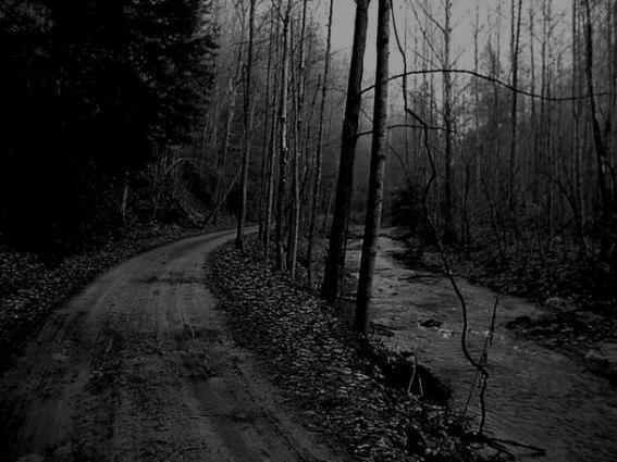 woodsyroad